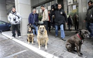Athens strays Troika