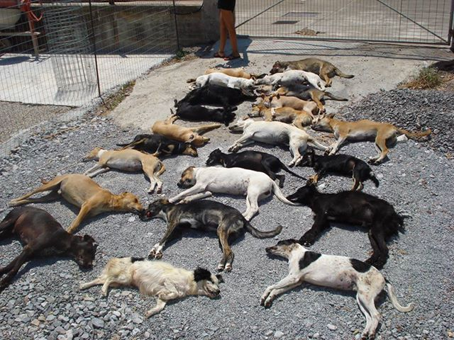 poisoned dogs Sitia Crete