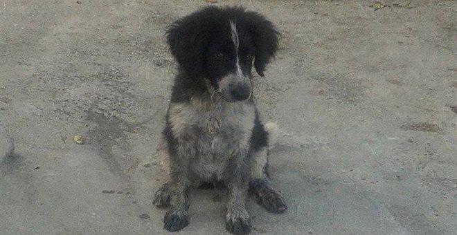 stray puppy Maggie