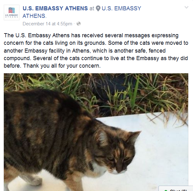 feral cats us embassy