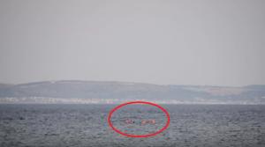 migrants swimm to turkey1
