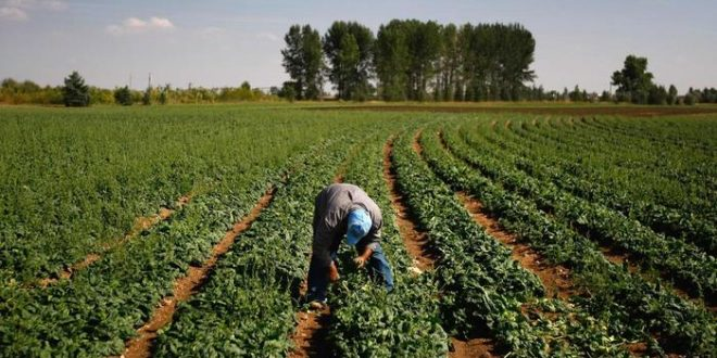 Greek Gov't plans to give state land to 1,500 refugees so they can work as farmers
