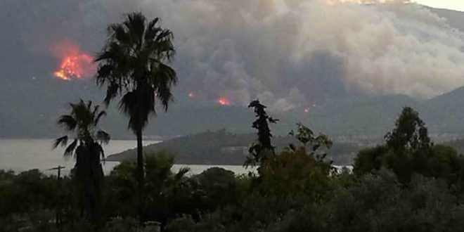 Hundreds of children evacuated from summer camp as wildfire rages in Sofiko, Corinth
